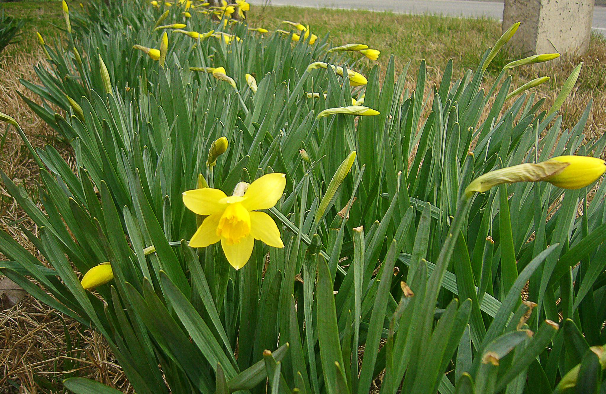 Весна на Кубани